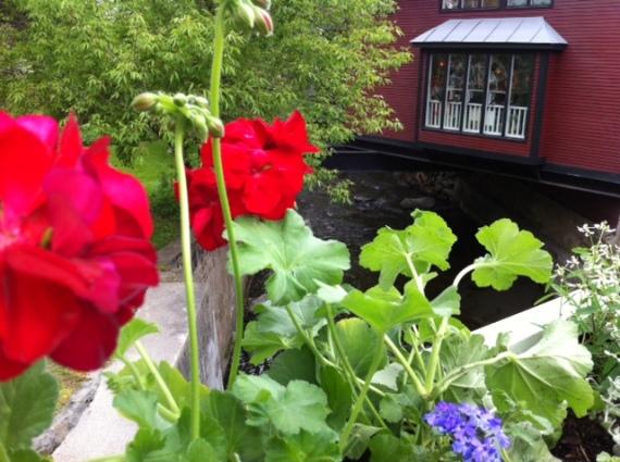 post office geranium